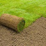 Как выбрать рулонный газон?